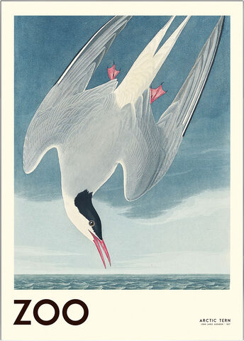 the-zoo-collection-arctic-tern-edt-001