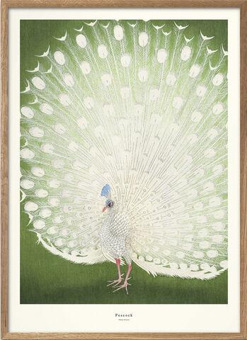 A. P. Atelier - peacock 1