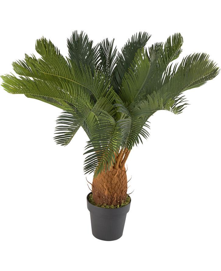 KUNTIG CYCAS PLANTE, 93 cmH
